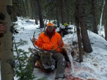 Bull Elk Rifle