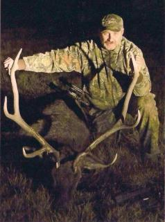 Bull Elk with bow